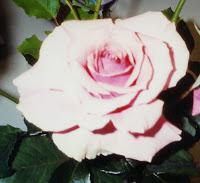 Tournament of Roses